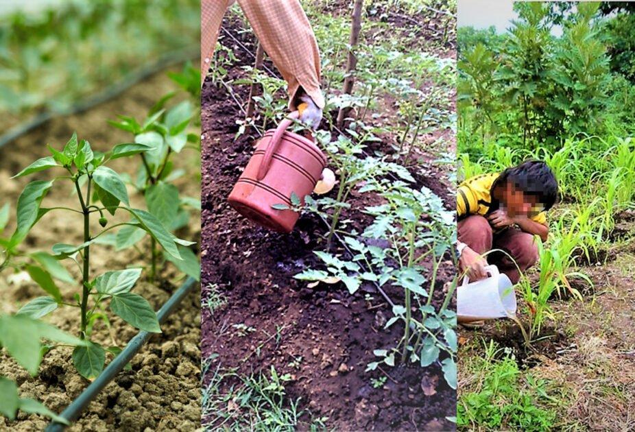 Cultivos siendo regados por personas