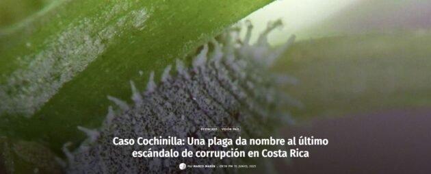 Cochinilla Algodonosa, insecto plaga en las plantas. Nombre dado al Caso Cochinilla