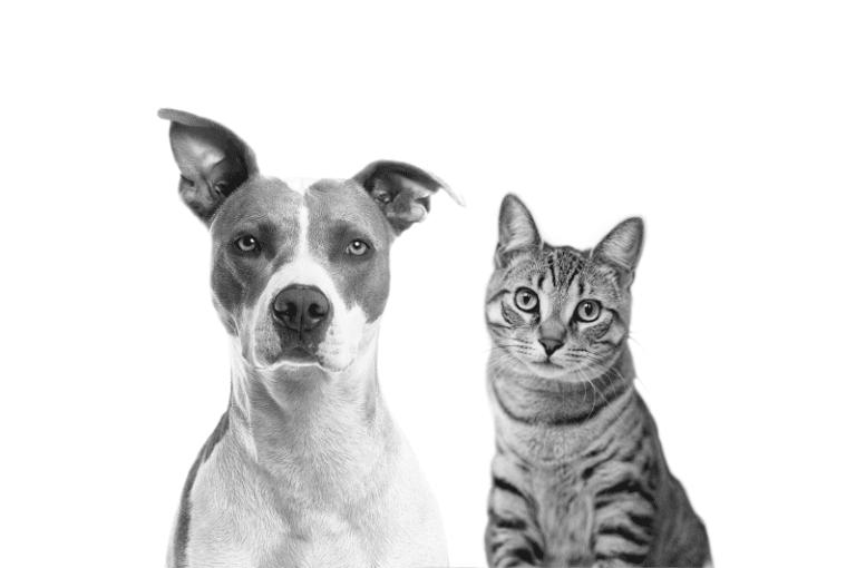 Perros y Gatos Caneche, en color blanco y negro